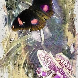 Butterfly Postcard by Kelly Schutz