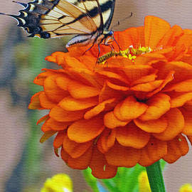 Kay Novy - Butterfly With Colorful Zinnia