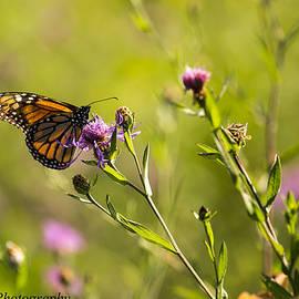 DK Hawk - Butterfly2
