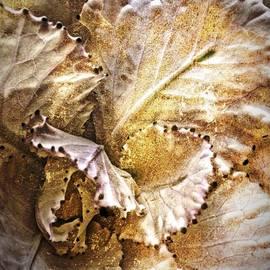 Cabbage Flower by Kathleen Messmer