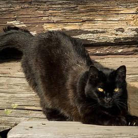 Melissa Stramel Hunt - Cabin Kitty