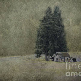 Cabin Under the Trees by Wendi Donaldson Laird