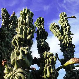 Mariusz Kula - Cactus 2