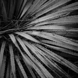 Timothy Bischoff - Cactus 5250