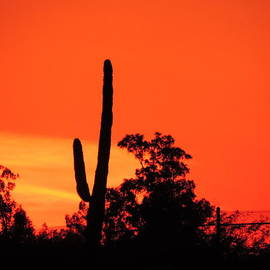 Bill Tomsa - Cactus Against A Blazing Sunset