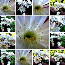 Leanne Seymour - Cactus Flower Inspired