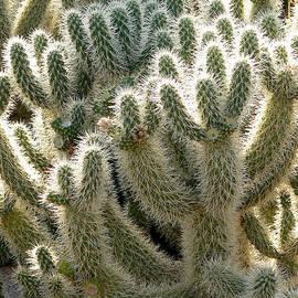 Laurel Powell - Cactus