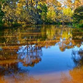 Caddo Lake 43 by Ricardo J Ruiz de Porras