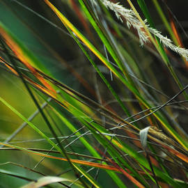 Rebecca Sherman - Calamagrostis Lines