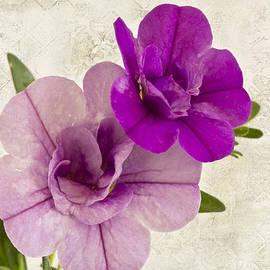 Sandra Foster - Calibrachoa Petunia Blossoms Macro