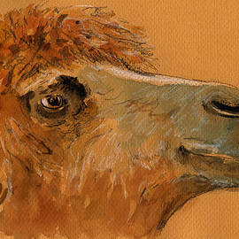 Camel head study by Juan  Bosco
