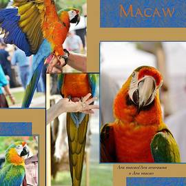 Kae Cheatham - Camelot Macaw Poster