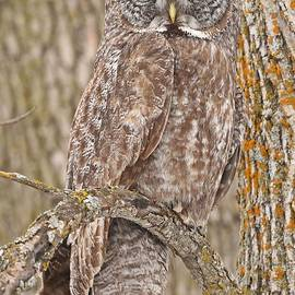 Heather King - Camouflage-an owl