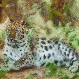 Camouflage Cat by Trish Tritz