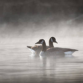 Canada Geese In The Fog by Bill Wakeley