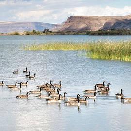 Allan Van Gasbeck - Canada Goose on Banks Lake