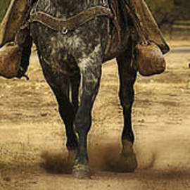 Priscilla Burgers - Canine Verses Equine