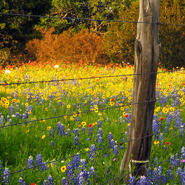 Cant Fence Flowers by Joe Pratt