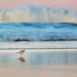 Bill Wakeley - Cape Cod National Seashore Piping Plover