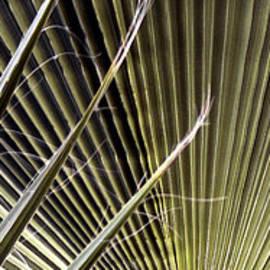 Captivation - Palm Leaf