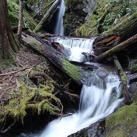 Cascade Rainforest Waterfall Swirls - British Columbia by Ian Mcadie