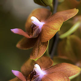 Cascading Exotic Orchids by Julie Palencia