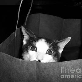 Cynthia Harrington - Cat In The Bag
