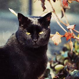 Trish Tritz - Cat Stevens