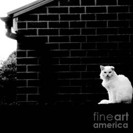 Cat With The Floppy Ear in black and white by Abbie Shores