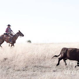 Cattle Drive by Cindy Singleton