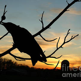 CawCaw Over Sunset Silhouette Art by Lesa Fine