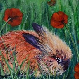 Paula Noblitt - Charlie The Lion-Head Rabbit