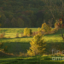 Aimelle - Charming Nature Scene