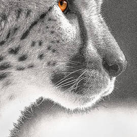 Don Johnson - Cheetah Profile -- Fractalius Number 2