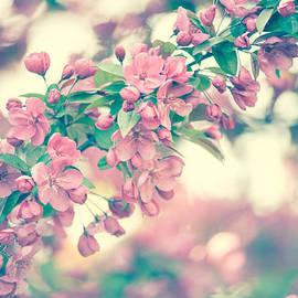 Zina Zinchik - Cherry Blossom
