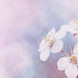 Cherry Magic by Alexander Senin