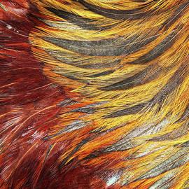 Chickenstract by Jan Dolan (foto.phrend)