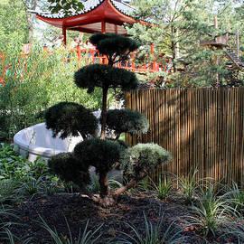 Julien Boutin - Chinese Garden
