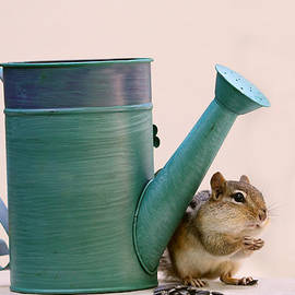 Chipmunk and Watering Can by Peggy Collins
