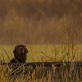 Jean Noren - Chocolate Lab Hunting Ducks