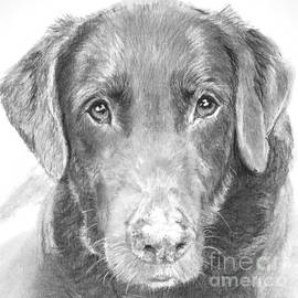 Kate Sumners - Chocolate Lab Sketched in Charcoal