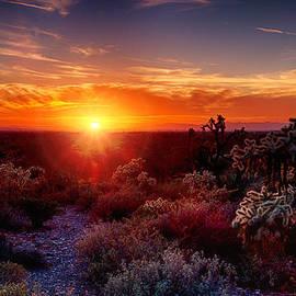 Saija  Lehtonen - Cholla Sunset