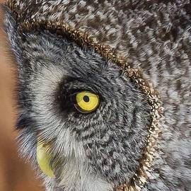 Great gray owl by Gina Levesque