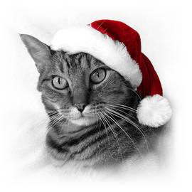 Christmas Cat 1 by Helene U Taylor