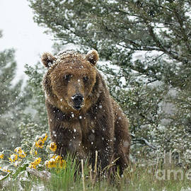 Christmas in July by Wildlife Fine Art
