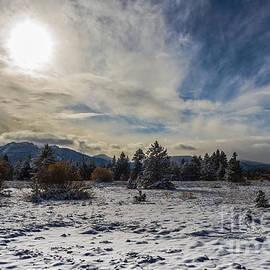 Mitch Shindelbower - Christmas Meadow