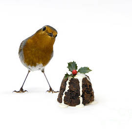 Christmas Robin by Tim Gainey