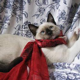 Pamela Benham - Christmas Scarf Kitten One