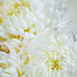 Alexander Senin - Chrysanthemums
