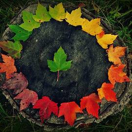 Sarah Pemberton - Circle of Leaves
